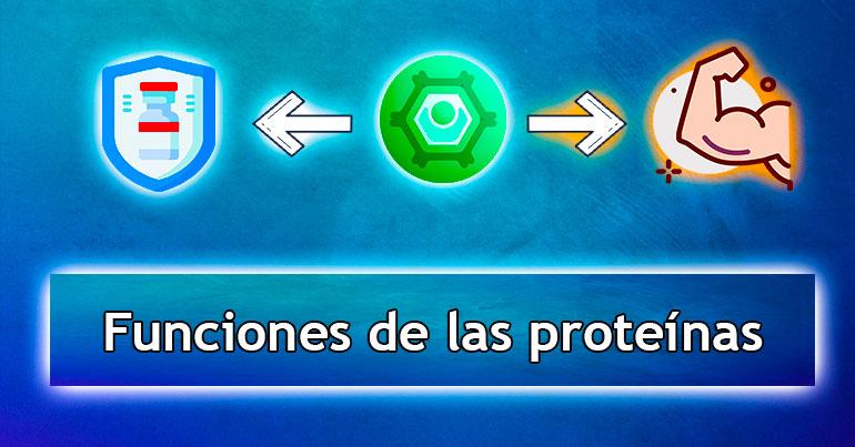 Funciones-de-las-proteínas