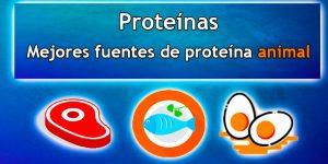 Descubre cuáles son las mejores fuentes de proteína animal